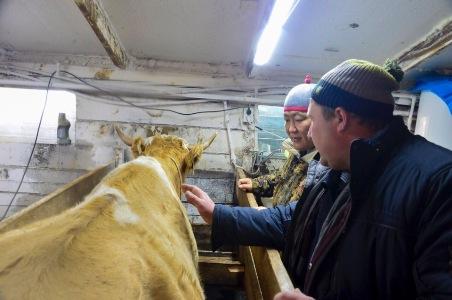 Глава Тувы поручил создать штабы в районах по организованному проведению зимовки скота